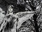 Galerie angel-5.jpg anzeigen.
